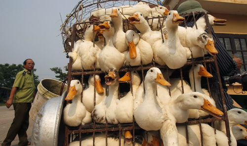 Vietnam's livestock-poultry industry to suffer most after major trade pacts take effect