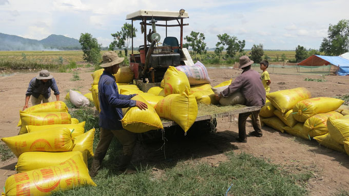 Chinese harvesters become delta farmers' obsession