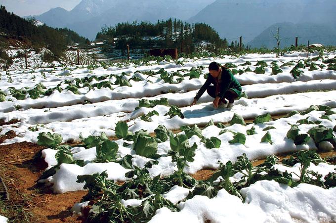 Sa Pa shivers in heavy snowfall