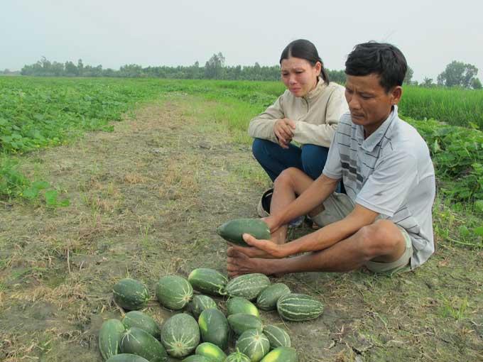 Farmer sows honeydew seeds, harvests strange melon