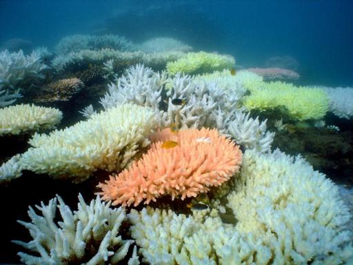 Australia approves plan to dump dredge spoil in Barrier Reef