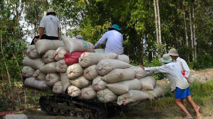Vietnam wins Philippines tender for 800,000T of rice