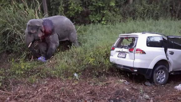 Six killed in Thailand in three-car crash caused by elephant