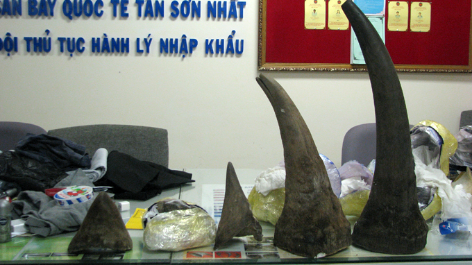 Over 13kg smuggled rhino horns seized at HCMC airport