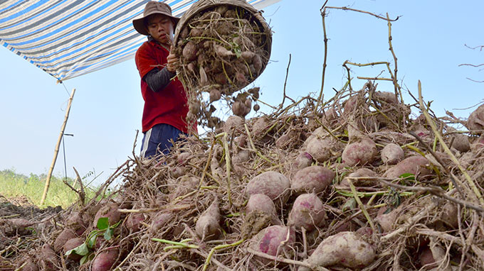 Vietnamese farmers seek to reduce reliance on China with new markets