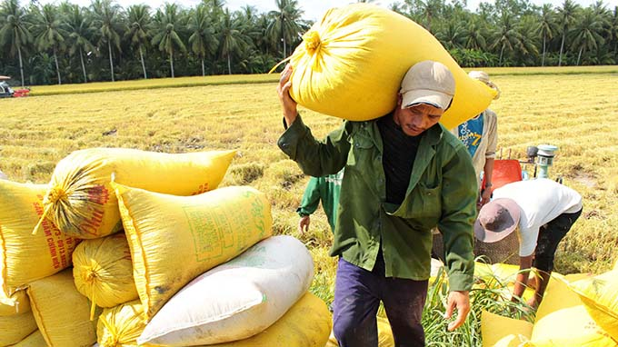 China's refusal of cross-border rice shipments has little impact on Vietnam: experts