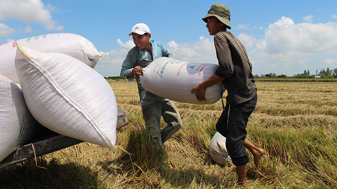 Only 1% of Vietnamese enterprises investing in agriculture: ministry