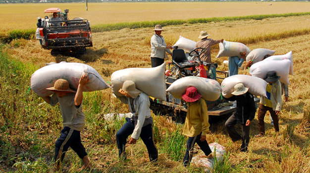 Vietnam grapples to find outlets for its rice