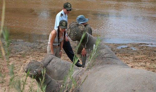 Vietnam diva in South Africa to help protect rhinos