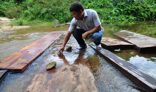 Locals steal wood in Vietnam national park thanks to dearth of rangers