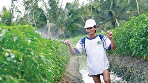 Vietnam's Mekong Delta farmers spend $291mn on crop protection in H1: GfK