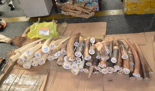 Vietnamese customs seize over 65kg of suspected rhino horns, elephant tusks