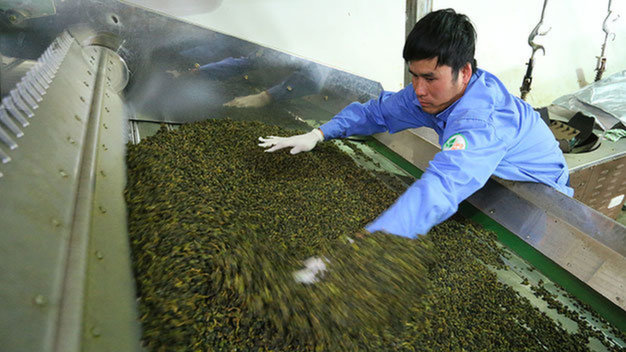 Vietnam province quashes Taiwanese rumor of dioxin-tainted tea