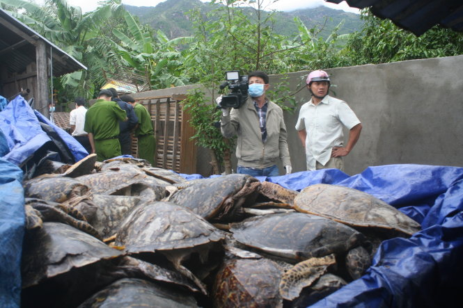 Tonnes of dead endangered sea turtles confiscated in Vietnam, again