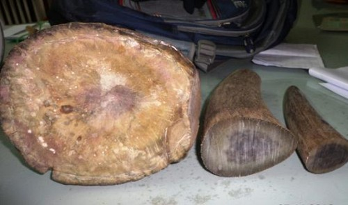 Vietnam police detain two men for illegal trade in rhino horns