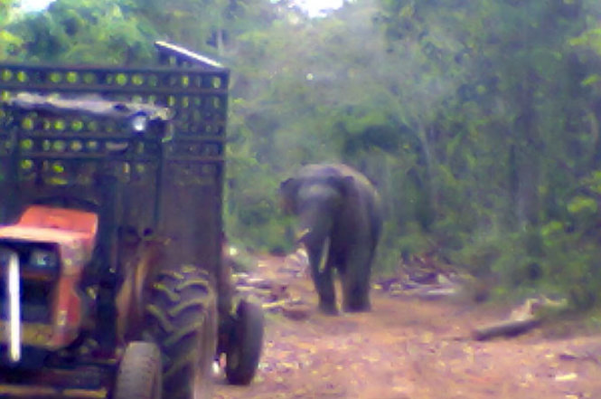 Residents live in great fear of elephant attacks in southern Vietnamese province
