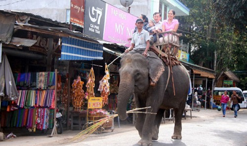 Tamed elephant dies after plunging down hill in Vietnam over exhaustion