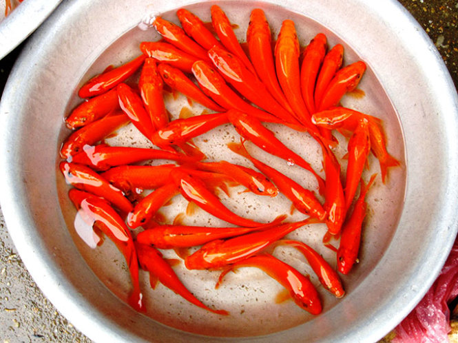 Tet red carps see off Kitchen Gods today, bring blessings (photos)