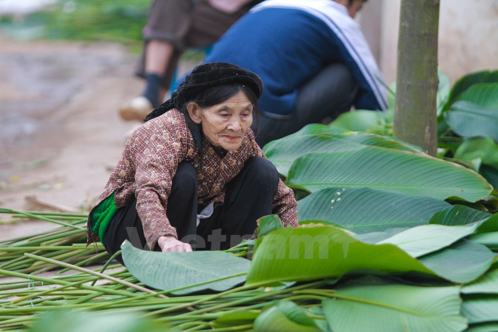 """Nguyen Thi Nga, 83, a Trang Cat villager, said she has grown """"dong"""" leaves since she was young and now helps her children harvest leaves."""