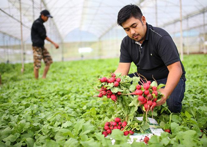 Japan suggests building agro-industrial park in Vietnam's veggie hub