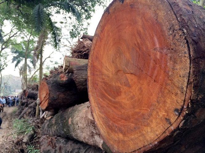 Architects, netizens make film against 'tree massacre' in Vietnam capital