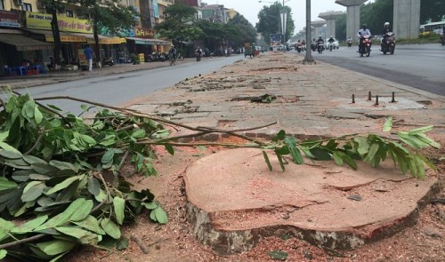 On the slaughter of trees in Vietnam capital