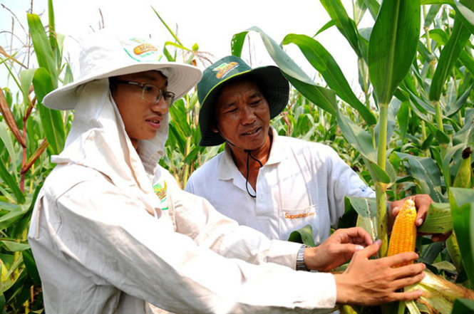 In Vietnam, genetically modified food sold without proper labeling