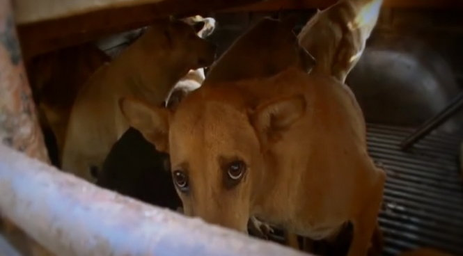 Celebrities support campaign to end dog meat trade in Vietnam