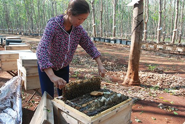 In Vietnam, bee keeper exodus begins around March for premium honey