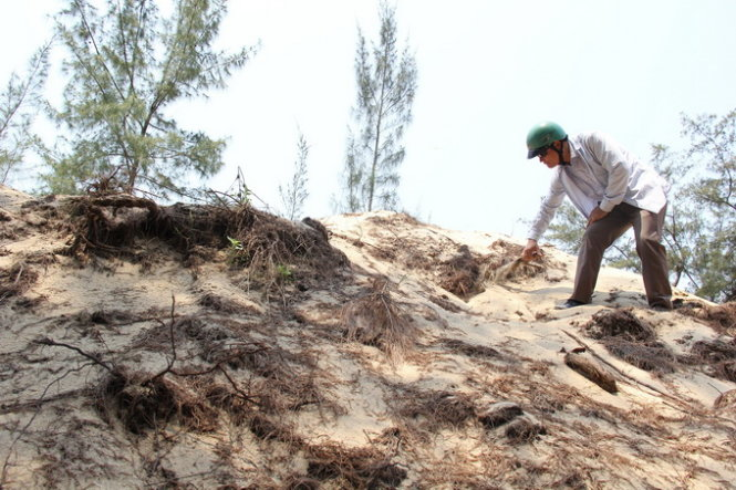 Uprooting aspen trees for sand exploitation in central Vietnam province