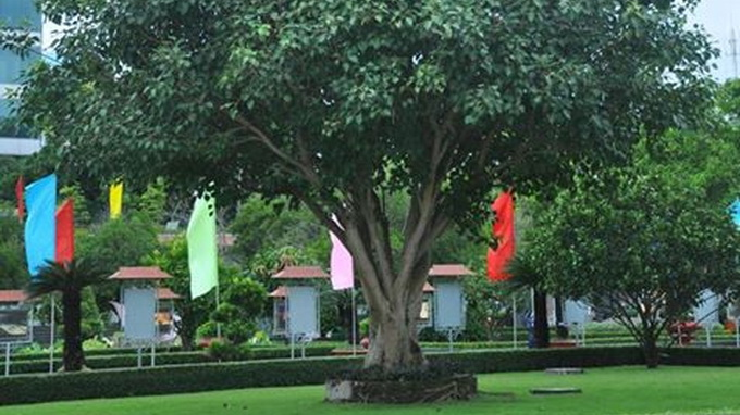 Test your knowledge of this tree to win free India trip