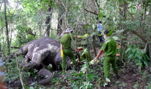 Another elephant dies of exhaustion while serving tourists in Vietnam