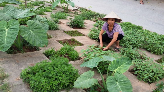 Spooked by unsafe greens, Vietnamese people grow veggies at home