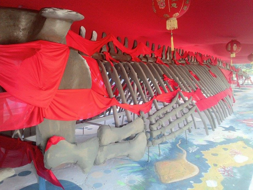 Vietnam firm reconstructs sacred whale's 10-ton skeleton