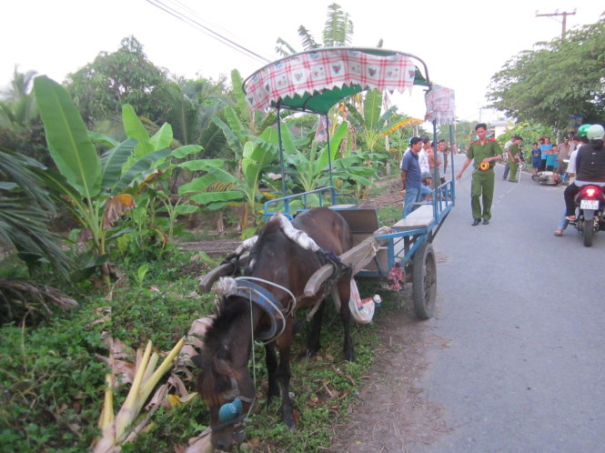 'Mad' horse carriage kills elderly man in traffic accident in southern Vietnam