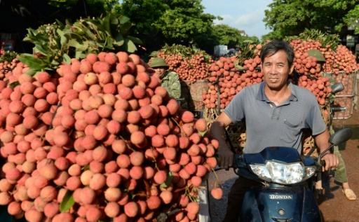 After China woes, Vietnam's litchi farmers head to new markets