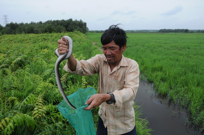 Hunting poisonous snakes for a living in Ho Chi Minh City