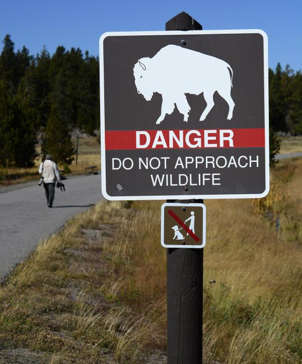 Bison gores woman attempting selfie photo at Yellowstone park