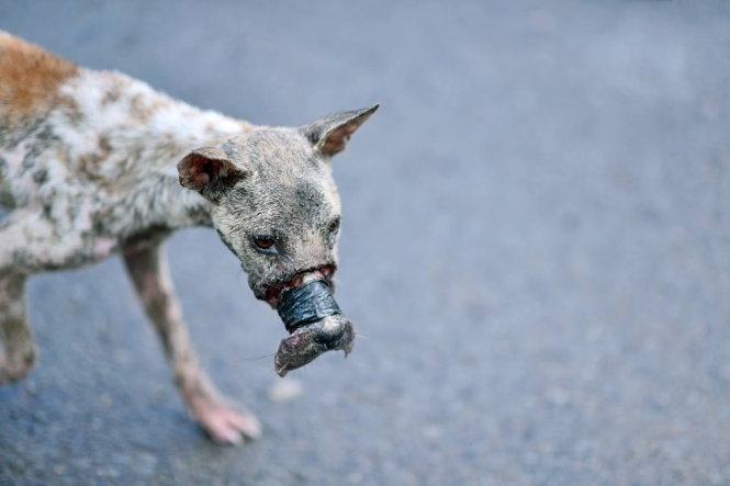 Dog with necrotic mouth rescued after slaughterhouse escape in Vietnam