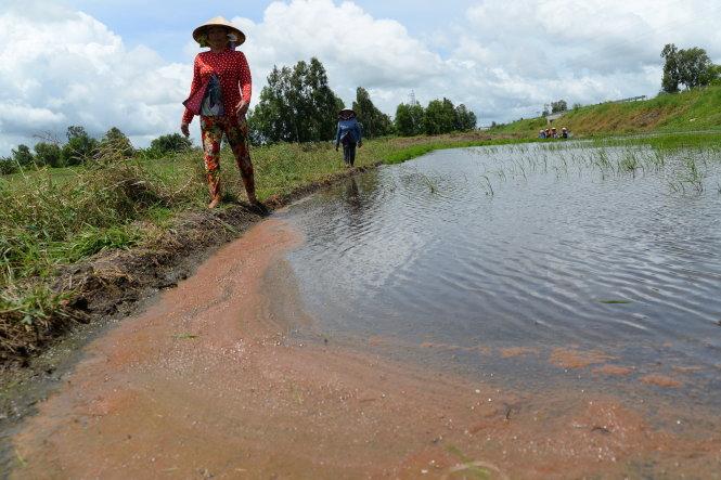 Salt water increasingly attacks Vietnam's Mekong Delta
