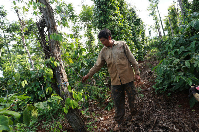 In Vietnam, farmers' crops sabotaged as they reject 'protection money' demand