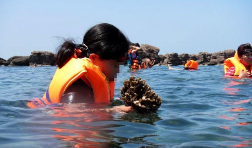 Pollution killing off coral under Phu Quoc sea in Vietnam