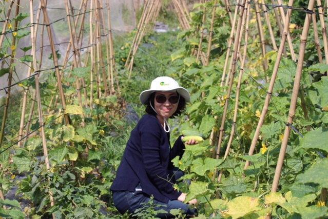 Vietnam has first vegetable farm to gain US, EU organic certification