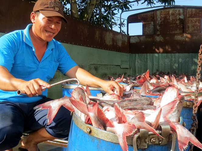 Vietnam asks catfish growers to get ready for new US inspection rule