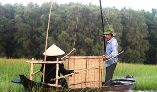 'Ghost rice' in Vietnam – P2: Harvesting in darkness