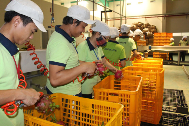Japanese businesses seek agricultural opportunities in Vietnam