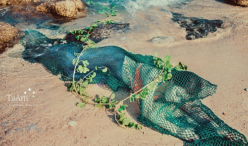 Authorities scratching heads over sanction for man behind mermaid story in Vietnam