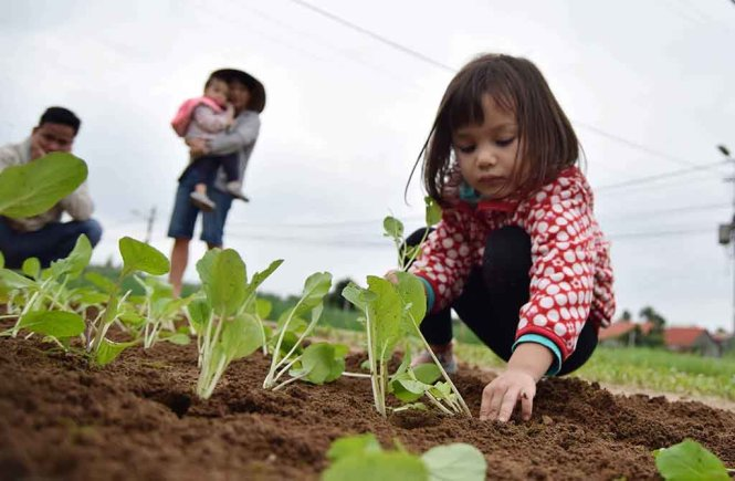 Riley Stirling learns to grow vegetables at the Tra Que vegetable village in Hoi An City in Quang Nam province.