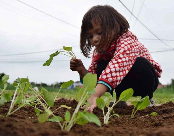 Growing the seedlings.