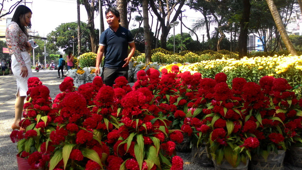 Ho Chi Minh City to open 128 flower markets for Tet
